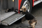 Mother dog rescues her puppies from burning house