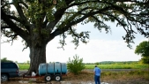 Man hauls tankers full of water to keep 350-year-old tree alive amid drought